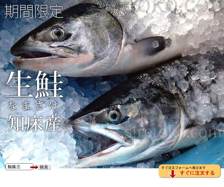 知床の生鮭